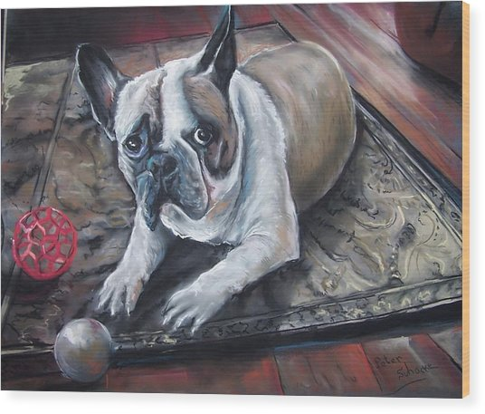 french Bull dog Wood Print