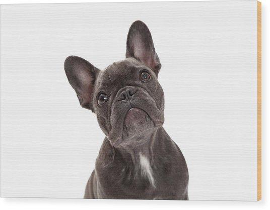 French Bulldog Closeup Wood Print