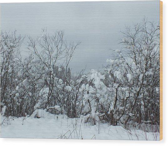 Freshly Fallen Wood Print by Gene Cyr