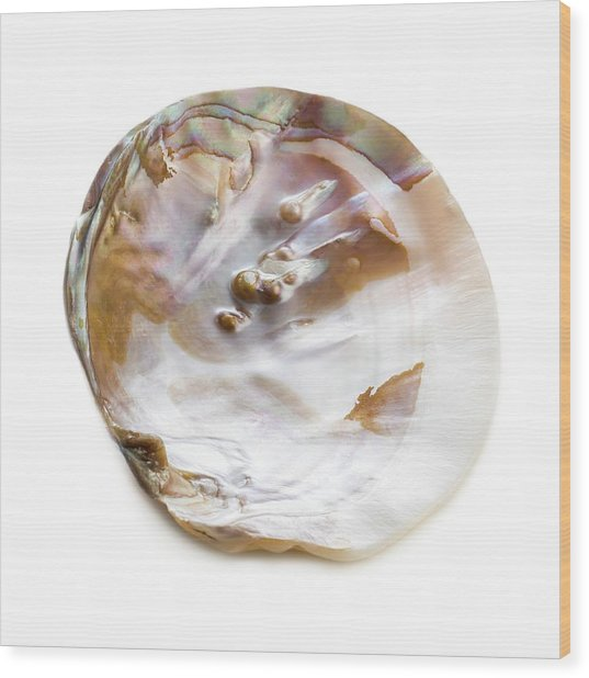 Freshwater Pearl Oyster Shell Wood Print