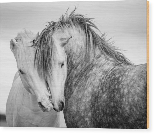 Friends II Wood Print by Tim Booth
