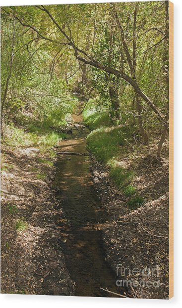 Frijole Creek Bandelier National Monument Wood Print