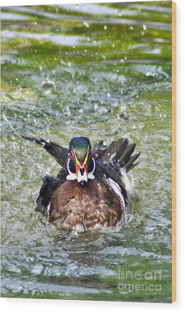 Frisky - Wood Duck Wood Print