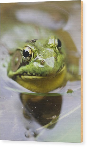 Frog And Fly Wood Print by Brian Magnier
