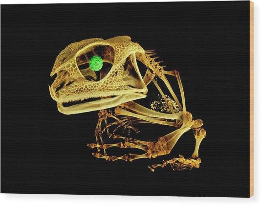 Frog Wood Print by Dan Sykes/natural History Museum, London