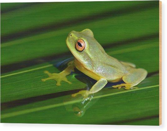Frog Eye Reflection Wood Print