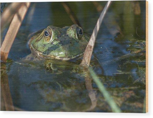 Frog Eyes Wood Print