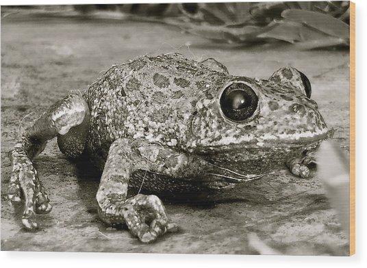 Frog Hair Wood Print
