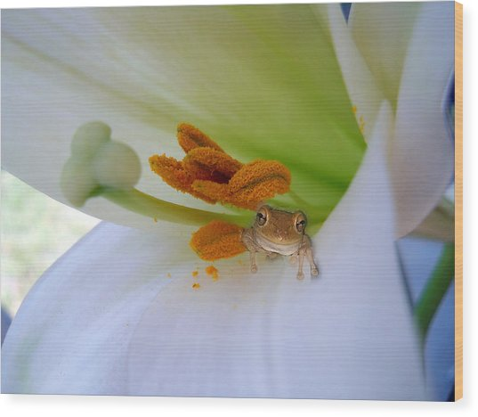 Wood Print featuring the photograph Frog In The Lily by Judy Hall-Folde