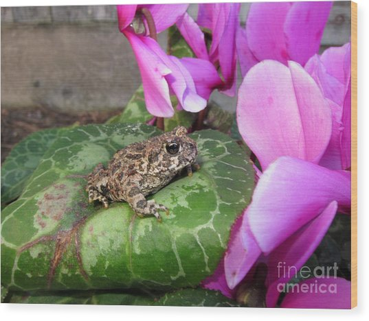 Frog On Cyclamen Plant Wood Print