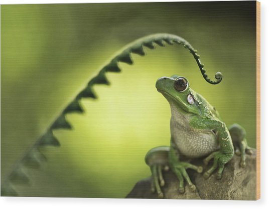 Frog On Green Background Wood Print
