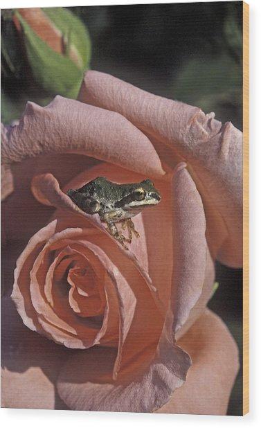 Frog On Rose Wood Print
