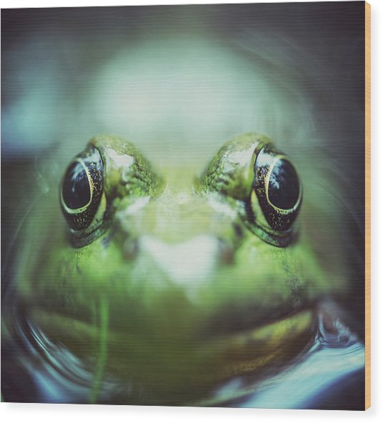 Frogs Level Wood Print by Shaunl