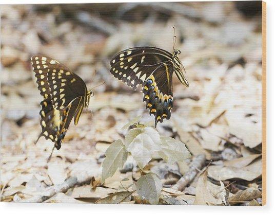 Frolicking Butterflies Wood Print