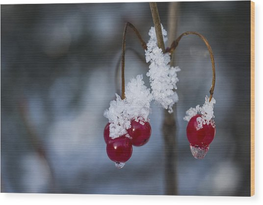 Frost Berries Wood Print