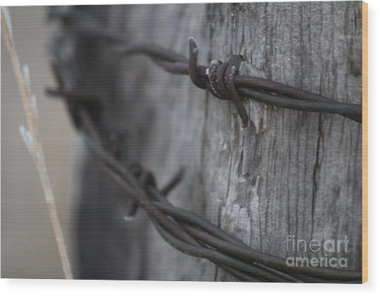 Wood Print featuring the photograph Frost On The Wire by Ann E Robson