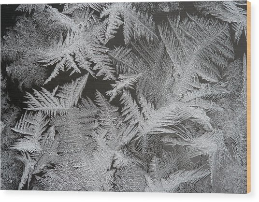 Frost Patterns Wood Print by Carolyn Reinhart