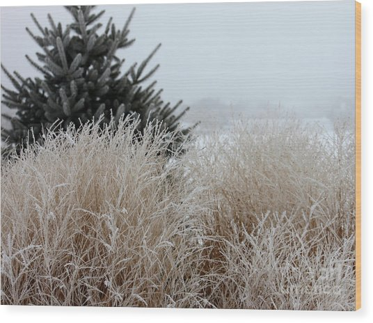 Frosted Grasses Wood Print