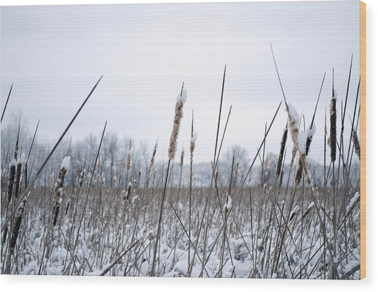 Frosty Cattails Wood Print