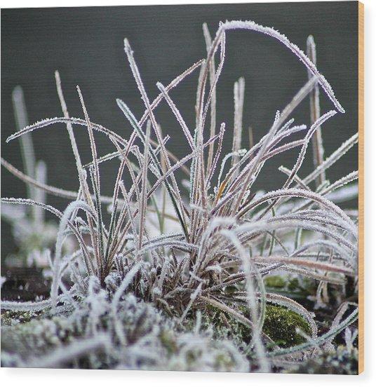 Frosty Grass Wood Print by Karen Grist