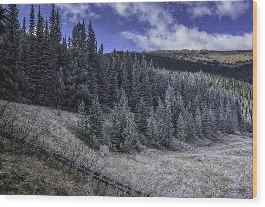 Frosty Pines Wood Print by Tom Wilbert