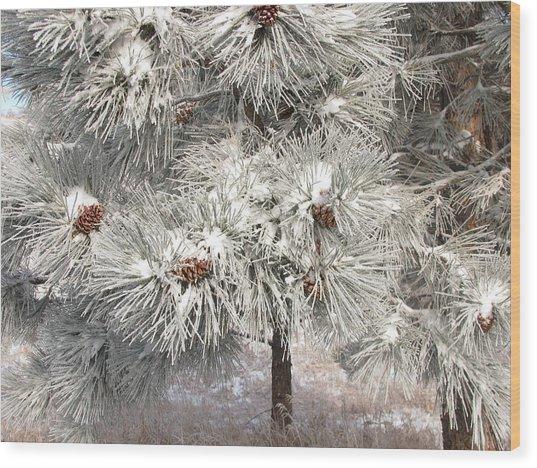 Frosty Pinetree Wood Print by Steven Parker