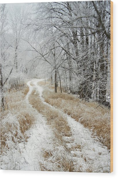 Frosty Trail Wood Print