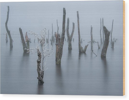 Frozen And Foggy World ........ Wood Print