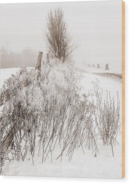 Frozen Fog On A Hedgerow - Bw Wood Print