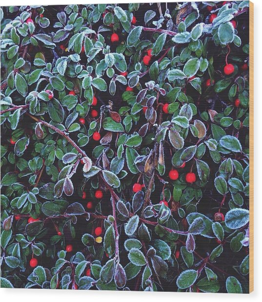 Frozen Fruit Tree Wood Print by Romy Lahoud / Eyeem