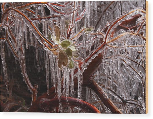 Frozen Icicles At Zion Wood Print