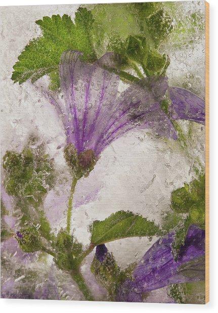 Frozen Mallow Flower Wood Print