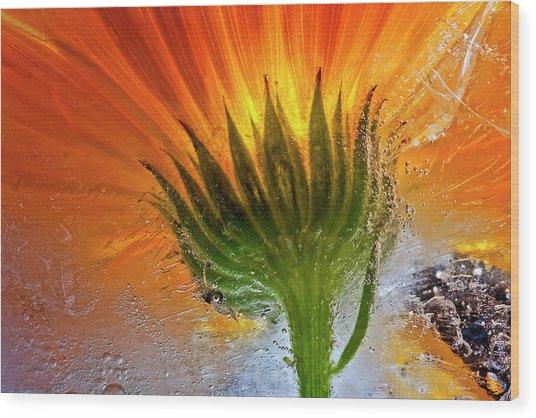 Frozen Marigold Wood Print by Secundino Losada