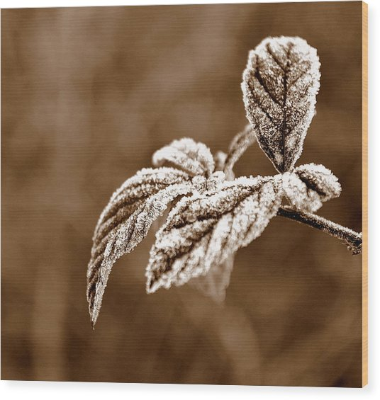 Frozen Wood Print