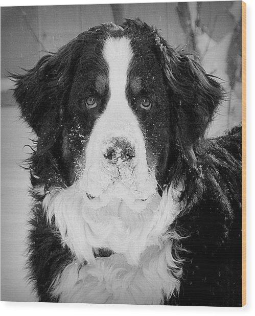 Frozen Nose Wood Print