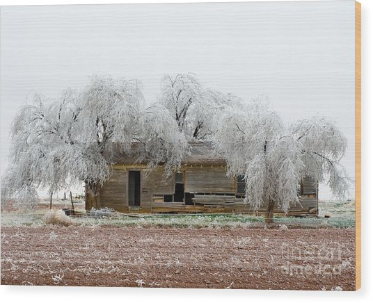 Frozen Trees And Shack Wood Print by Mae Wertz