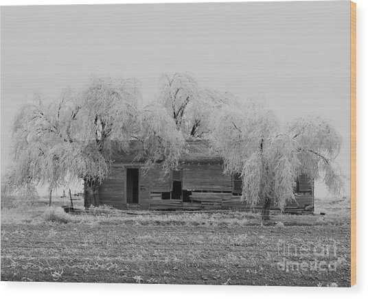 Wood Print featuring the photograph Frozen Trees In Black And White by Mae Wertz