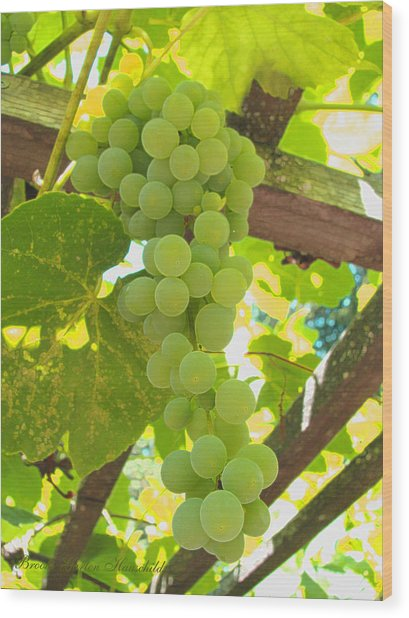 Fruit Of The Vine - Garden Art For The Kitchen Wood Print
