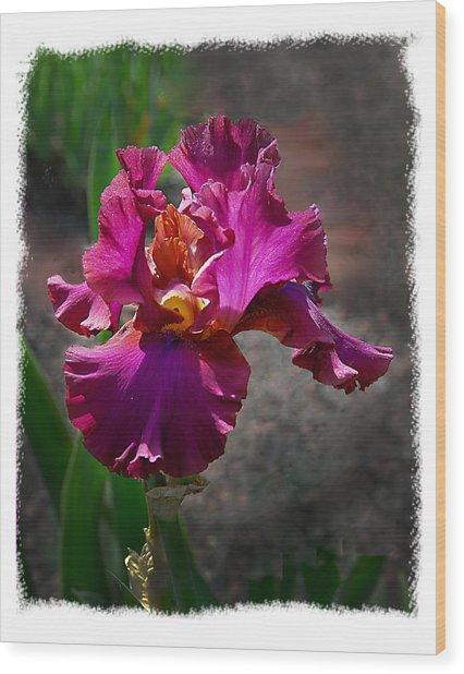 Fuchia Iris Wood Print by Wynn Davis-Shanks