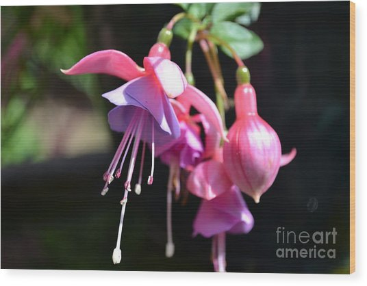 Fuchsia Flower Wood Print