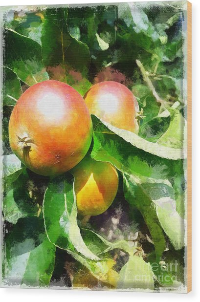 Fugly Manor Apples Wood Print