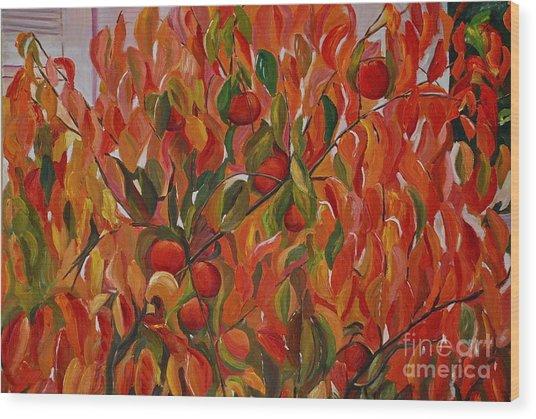 Fuyu Persimmon Tree Wood Print