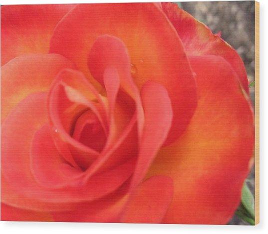 Full Bloom Wood Print by Rose Clark