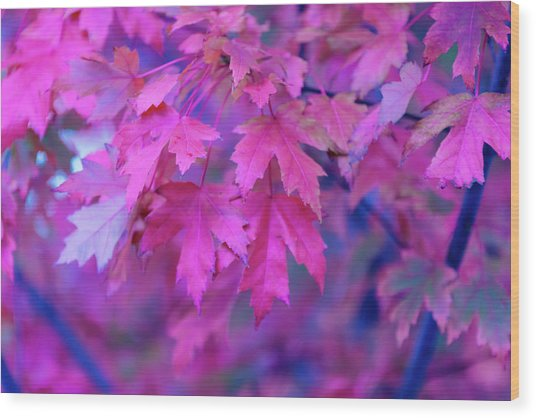 Full Frame Of Maple Leaves In Pink And Wood Print