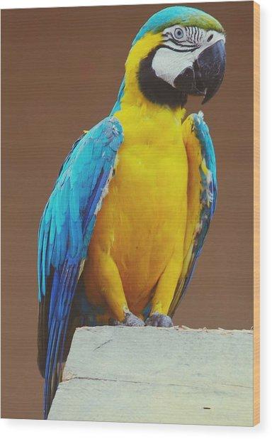 Full Length Of Blue And Yellow Macaw Wood Print by Hans Dyckerhoff / Eyeem