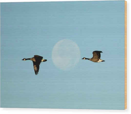 Full Moon Geese Wood Print