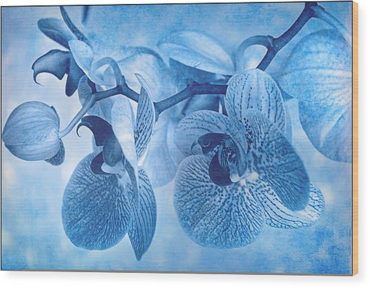 Full Moon Orchids Wood Print