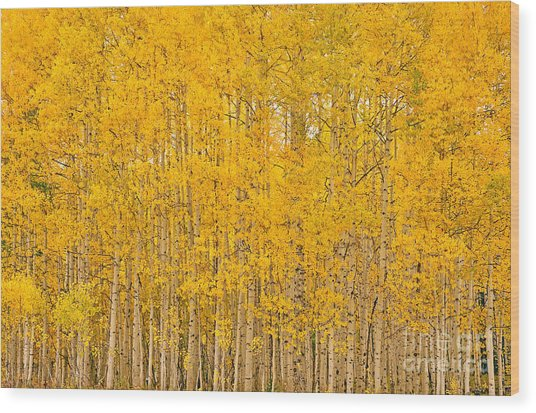 Fullness Of Gold Wood Print