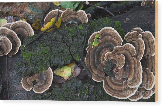Fungi Contrast Wood Print