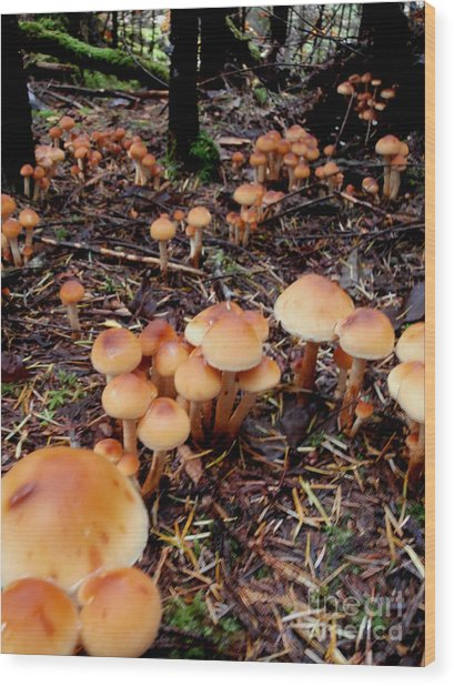 Fungi Forest Wood Print by Steven Valkenberg